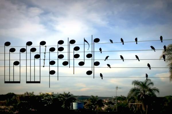 brazilec ptici noti 2