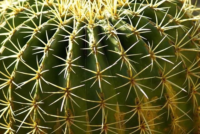 cactus-782411_640