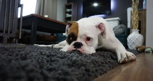 boxer-1562522_640
