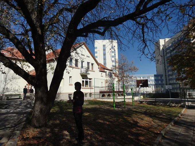 info sresta american college 2013 11