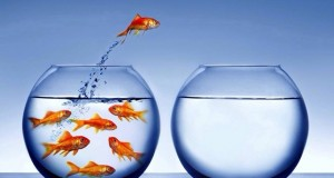 izpit acs riba