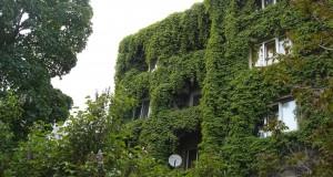 zelena sgrada 5
