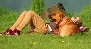 dog-764484_640
