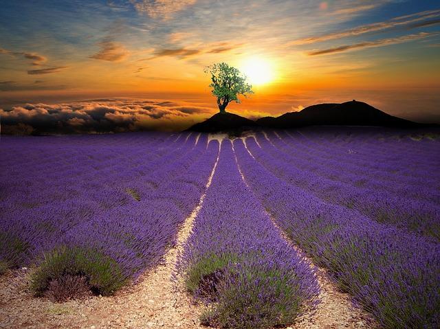 lavender-1385709_640