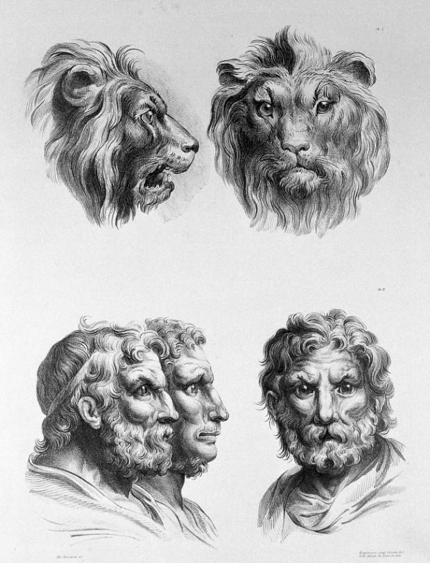 lion chovek
