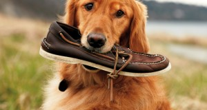 sperry boat shoes5
