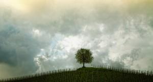 tree-207584_640