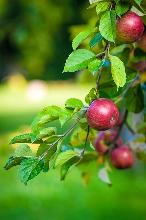 apple-484529_960_720