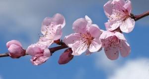 flowers-2127407_640
