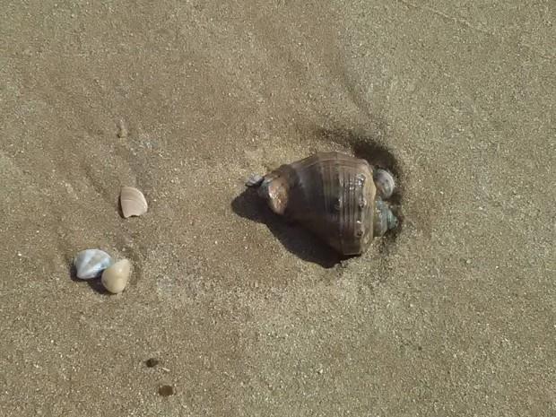 plaj kranevo albena 4