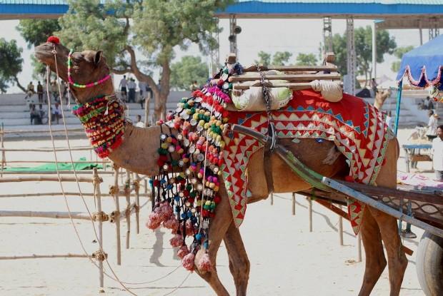 By sheetal saini (Flickr: pushkar fair) [CC BY 2.0 (http://creativecommons.org/licenses/by/2.0)], via Wikimedia Commons
