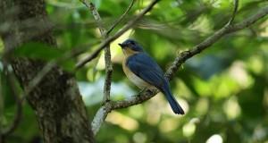 bird-3168055_640