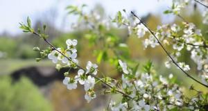 spring-3216806_640