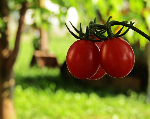 tomatoes-2787256_640