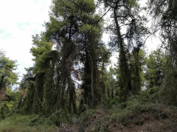 gora kriopigi 2