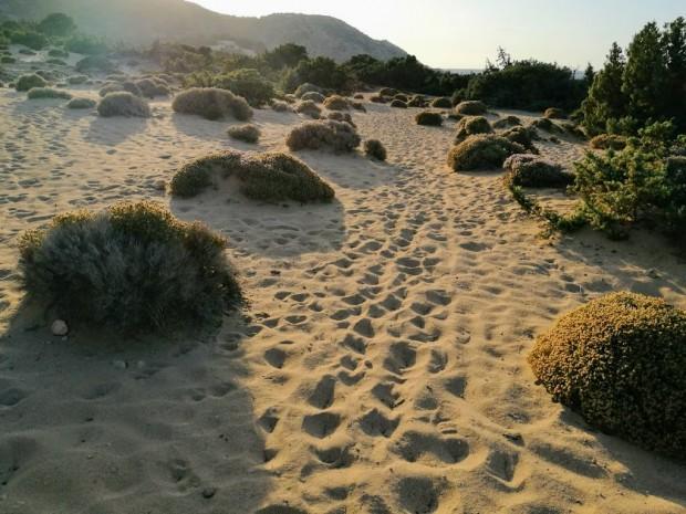 Пясъчните дюни на плажа Агиянис са безкрайни