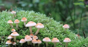mushrooms-482999_640