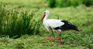 stork-4300368_640