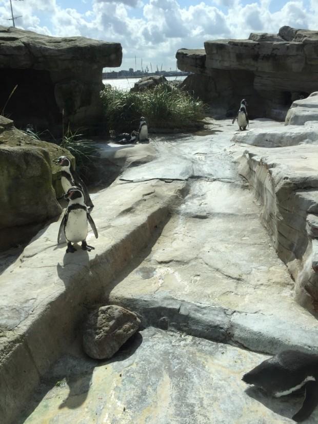 Bremerhaven_zoo1