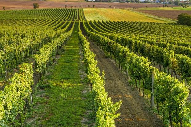wine-4565912_1280