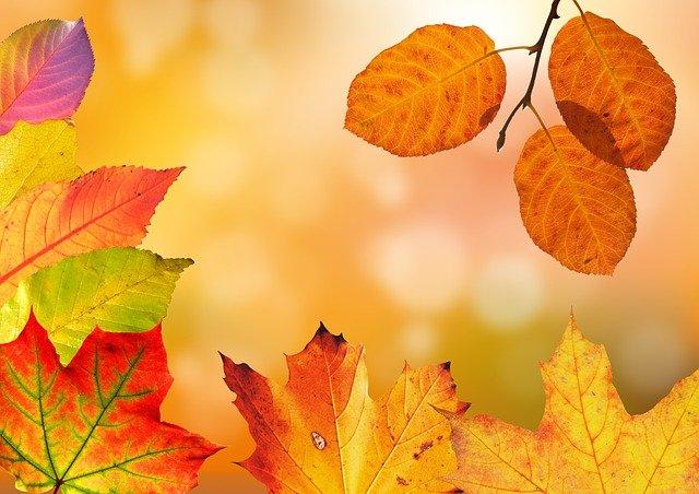 autumn-1649362_640 (1)