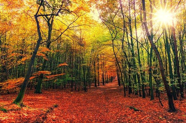 autumn-3804001_640