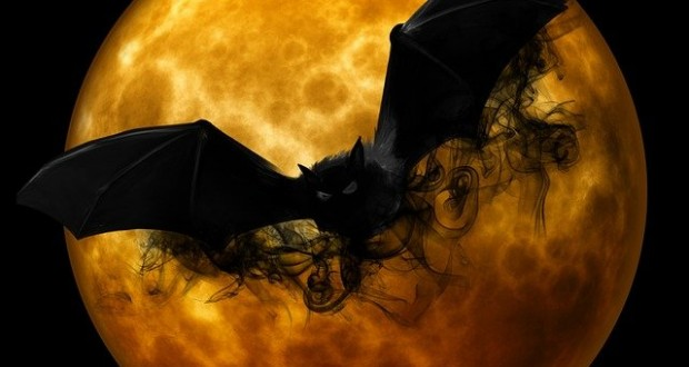 bat-988225_640