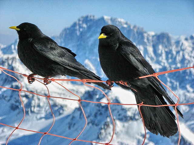 bird-1335285_640