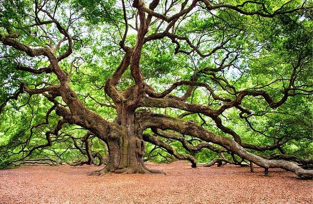 oak-tree-2018822_640