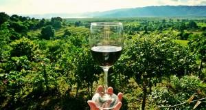 wine-2173239_640