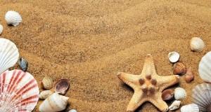 seashells-1337565_640